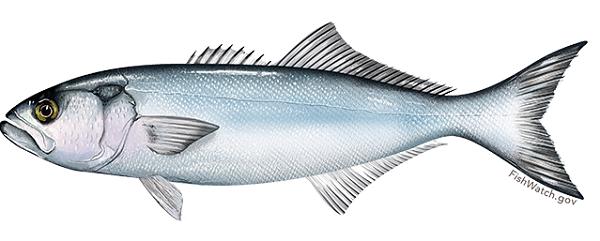 Omega 3 se nalazi i u ribi